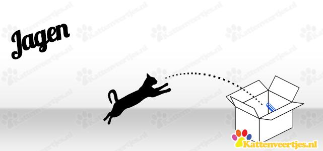 Kattenveertjes jagen