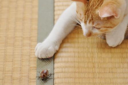 voedselverrijking_katten