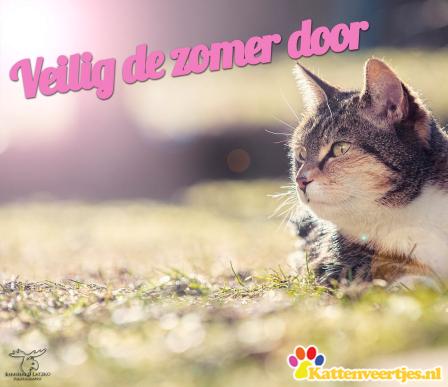 veiligdezomerdoor_katten_facebook
