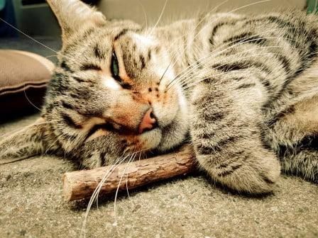 Cat Herbs - Catnip / Matatabi / Valerian