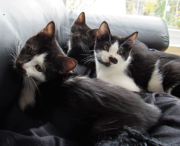 drie katten op een bank