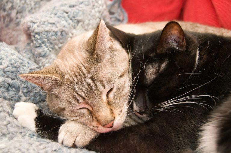 twee katten liggen bij elkaar