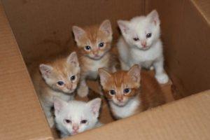 Vijf kittens in doos