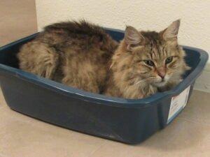 Er ligt een kat in een kattenbak