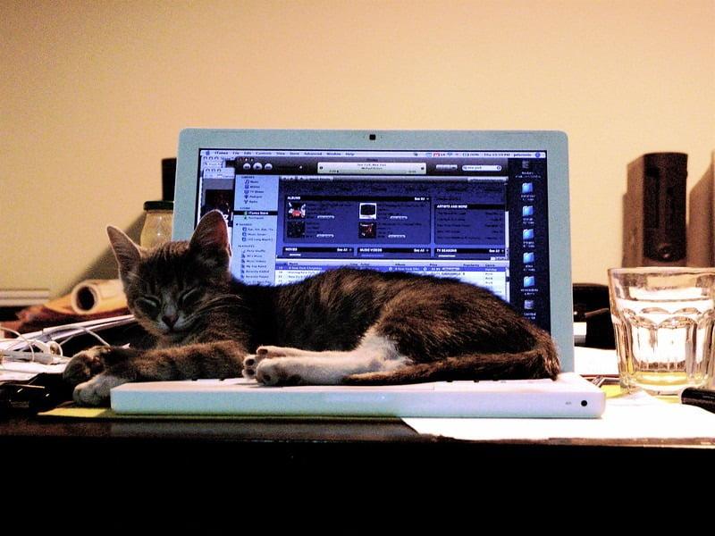 Kat ligt op laptop
