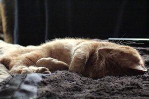 Een kat dit aan slapen ligt.