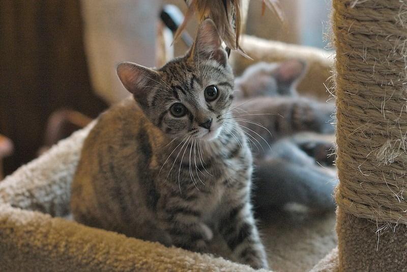 kat in kattenhotel