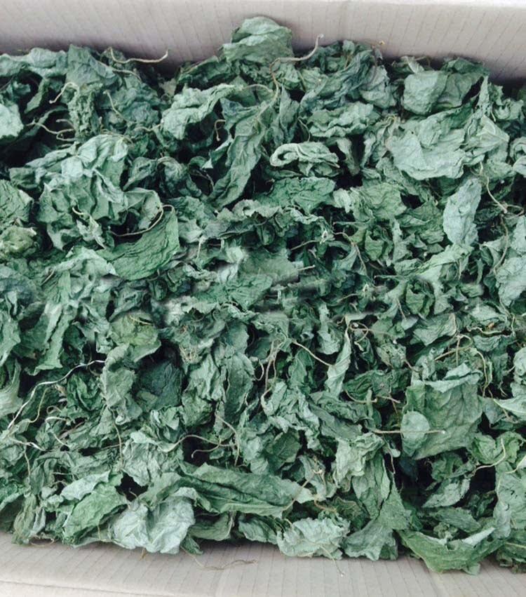 Matatabi bladeren