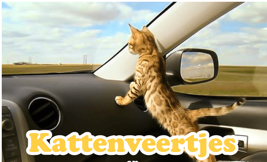 Bengaal kitten in auto
