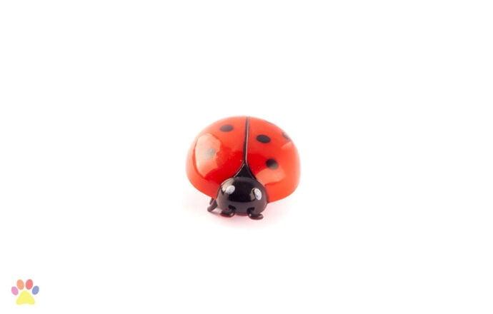 Crazy Bug kattenspeelje lieveheersbeestje