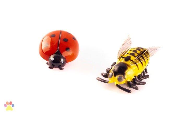 Crazy Bug 1st.