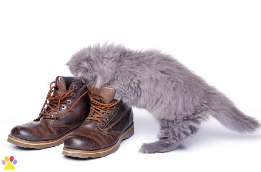 kitten zoekt cadeau van sinterklaas in schoen