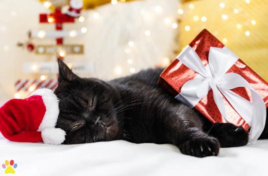 kerstblog met tips over kerst met katten