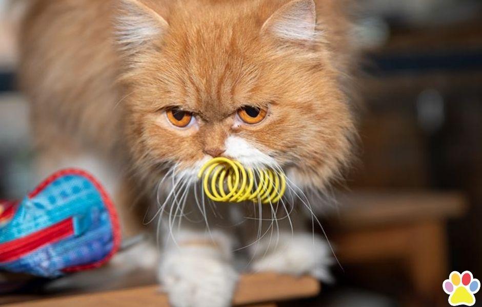 Fanmail kat met kattenveertjes