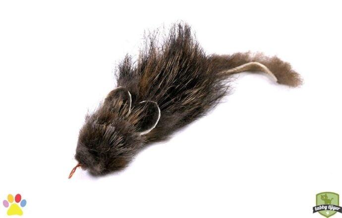 Tabby tijger - Ratatouille