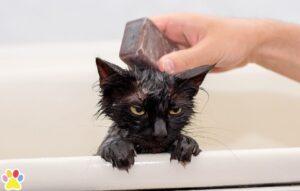 kat in bad