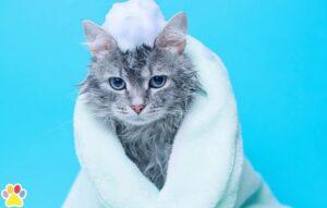 kat in handdoek met zeep op kopje