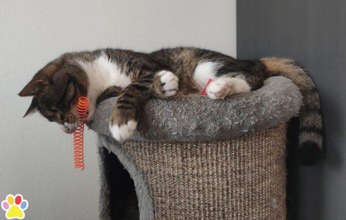 vink kattenveertjes snuffelpakket