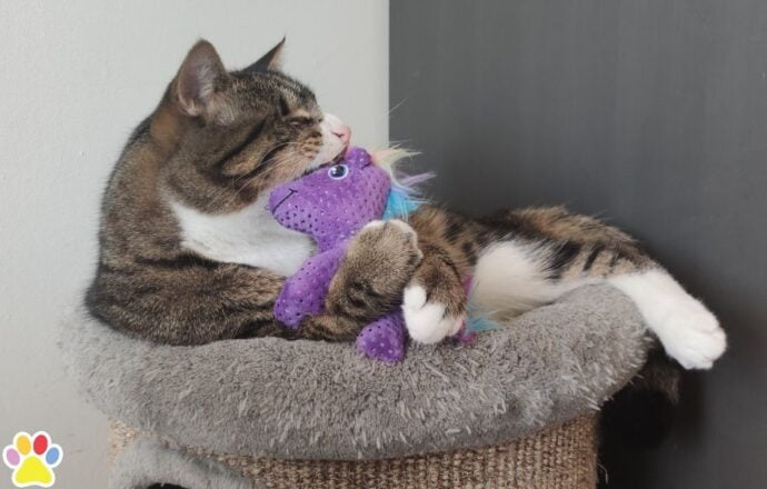 Kat met kong unicorn kattenspeeltje trappelkussen
