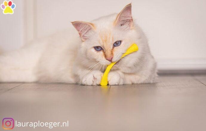 Kattenveertjes bonks