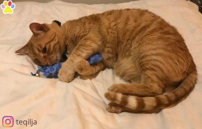 Trappelkicker Catnip- Handmade Dutch Cat Toys