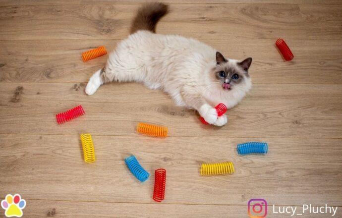 kattenspeeltjes Kattenveertjes