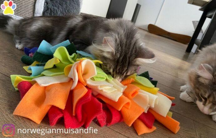 kattenveertjes snuffelmat