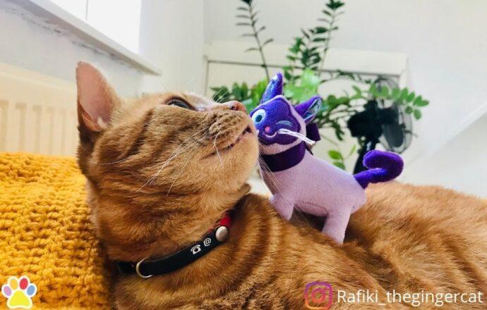 kong kat kattenspeeltje