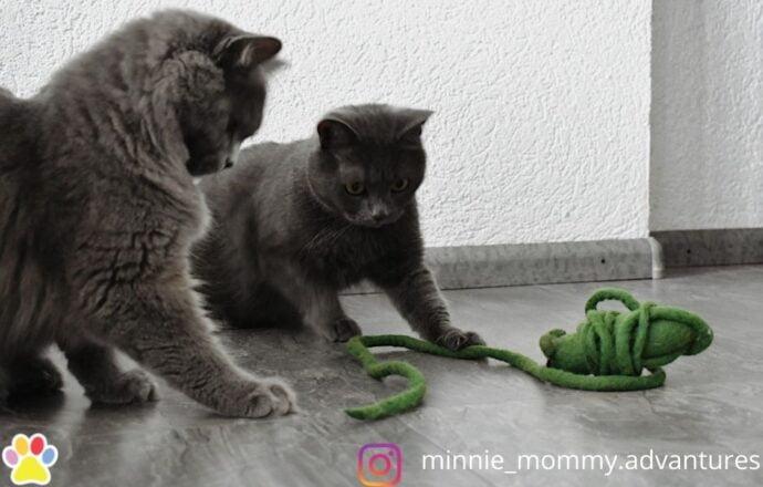 muis lange staart