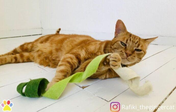 kattenspeeltje wollenstaart