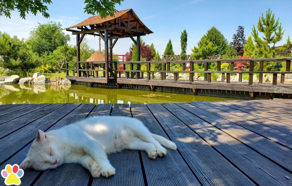 slapende kat op steiger bij het water