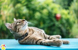 katten snorharen